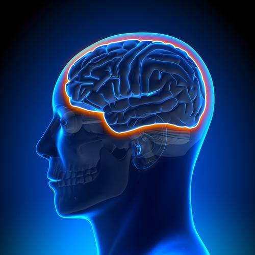 Blood brain barrier